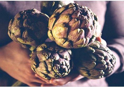 (10+) tác dụng của hoa atiso mà bạn nên biết.