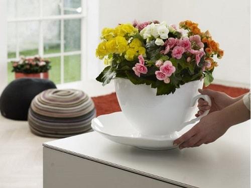 nên trồng hoa gì bán tết