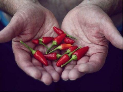 Mẹo vặt cho cách làm hết cay ớt ở tay và mắt tốt nhất.