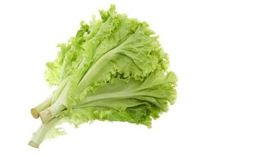 công dụng của rau xà lách
