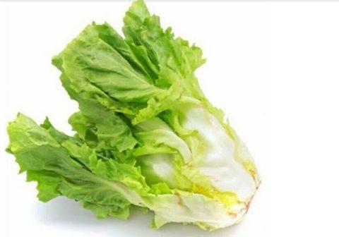 Khám phá những công dụng của rau xà lách đối với sức khỏe con người