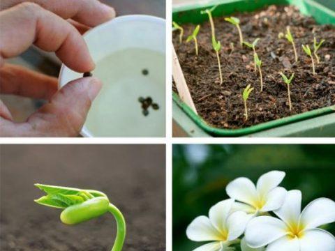 Quy trình chăm sóc hạt giống hoa các loại
