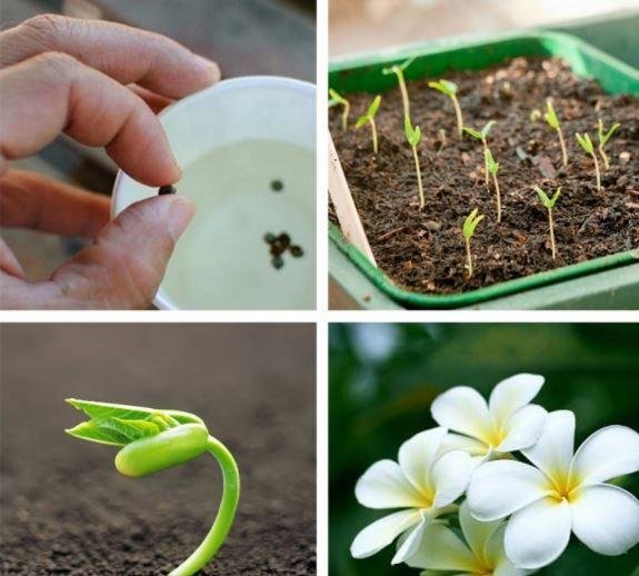 chăm sóc hoa