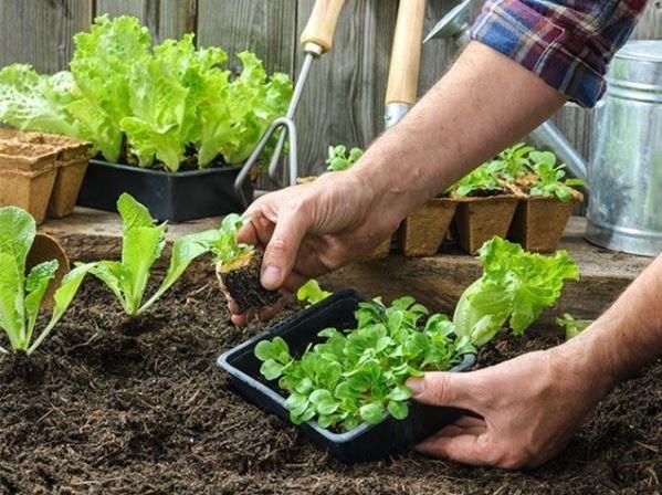 Những mẹo làm vườn đọc đáo mà bạn nên áp dụng
