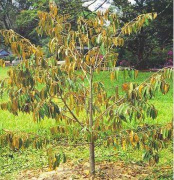 Tổng hợp các loại bệnh thường gặp ở cây cảnh bạn nên biết để phòng tránh