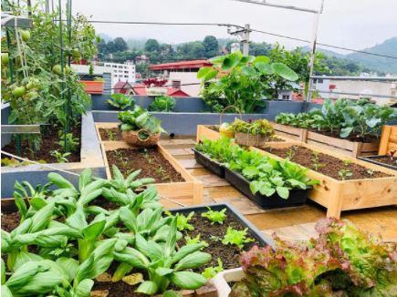 6 lưu ý quan trọng khi trồng rau quả trong vườn nhà