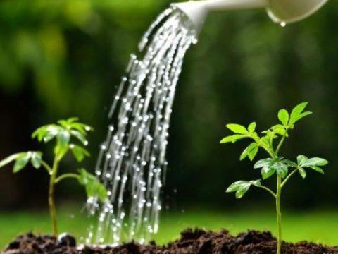 Tưới cây hợp lý: nên giữ ổn định lượng nước hay thay đổi theo mùa?