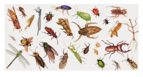 Mẹo đuổi côn trùng cực đơn giản mà hiệu quả
