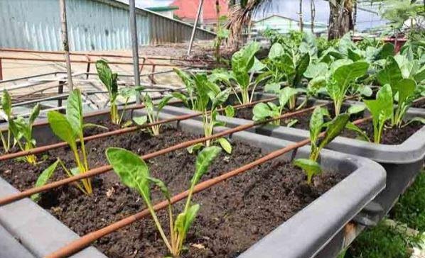 Làm vườn mùa mưa và những điều bạn cần biết