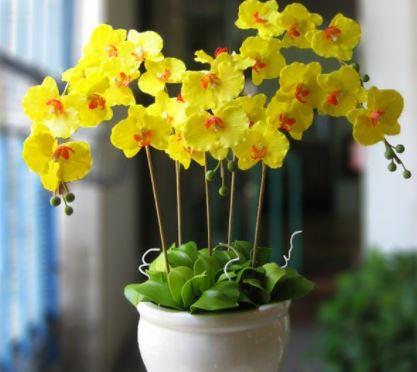 5+ loài hoa lan đẹp và dễ trồng nhất hiện nay