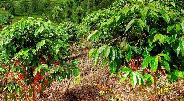 Đất đỏ là gì? Một số loại cây trồng thích hợp với đất đỏ